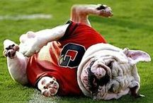 Georgia Bulldogs / by guide2athens