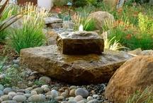 garden / by Gail Krapil