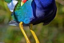 bird / by Gail Krapil