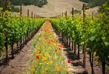 Seasonal Vineyard Beauty