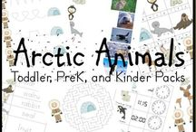 ARCTIC ANIMALS / by Kari