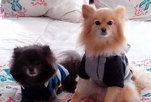 ChiCo & CaSH / All things for my Fur-Babies! / by Tanya.... Oh, Tanya....