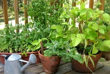 HOME: Edible Gardening