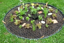 4.  Gardening / I would like to expand my vegetable and herb garden and to build a potting shed/green house in the old dog pens!! / by Sandy Olson
