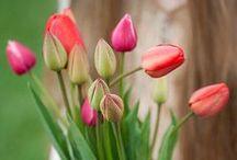 Photography: Flowers & Gardens / by Angela Millan Garcia