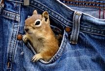 Cute squirrels * Grappige eekhoorns