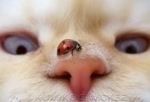 Lady Bugs * Lieveheersbeestje  / In The Netherlands we call them 'lieveheersbeestje'