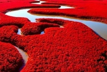 Red, only Red  / Red... a beautiful color!