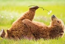 Springtime * Lente I.