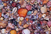 Sea Shells * Schelpen