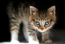 Cats....So lovely.... I