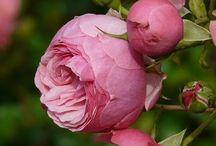 Pink II / Alles rose....