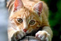 Cats.... So lovely... III