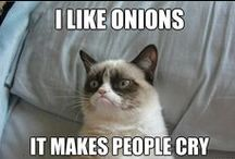 GRUMPY CAT; whenever I need a laughter break! :)