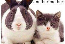 Friends! * Vrienden!
