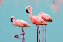 Flamingos / Photograpghy, Art,  and DIY Crafts featuring pretty flamingos in coral, pink, white, all colors.
