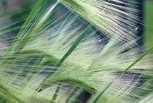 Grasses & Companion Plantings
