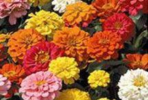Flower Beds, Gardening, Yard, & Landscaping, outdoor ideas / by Karen Goodson