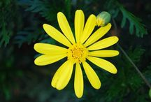 Primavera / Testimonio de florecimientos primaverales