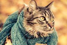 Cat Scratch Fever / Titty tats :) / by Meagan Pryor