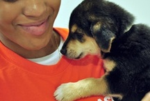 Companion Animal Action / We can make a future without puppy mills or homeless pets.  Support animal rescue, shelter and sanctuary.