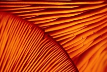 Orange / Anaranjado