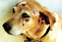 END ANIMAL CRUELTY TO ALL ANIMALS, / Eye for an eye.... / by Mary Helgemo