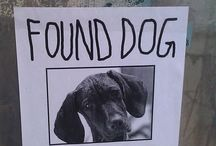 Lost n Found / Posting pix of lost pets and hopefully happy reunions :)