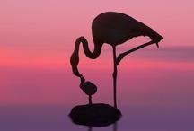 Flamingos Babay! / by Jennifer McCarroll