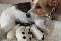 Pets, ours and others / Our darling pets and all the others that come and stay at the B&B