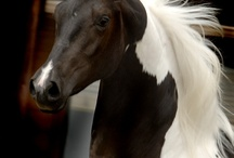 HORSES - Of course / I love them, all breeds and types / by Nancy Horton