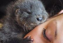 Otters / by CSUMB