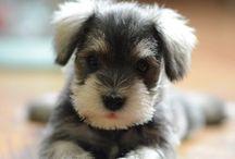 Awwww Cute