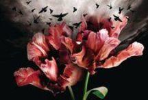 """Alyson Noël - Die Bücher / Pinterest Board zu Romantasy-Autorin Alyson Noël. Nach """"Evermore"""" und """"Riley"""" erscheint ab September 2012 ihre neue Serie """"Soul Seeker"""" auf Deutsch bei Page&Turner. http://www.evermore-unsterbliche.de"""