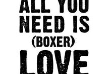 BUBBA LOVE / All things boxer... / by Ivonne Delgado