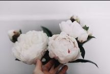 . eu vejo flores em você .