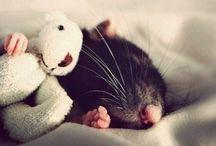 Rotat - Rats