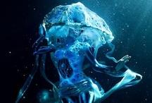 Underwater Photography by Zorz Studios