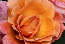 Flowers / by Lorraine's Oo La La