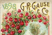 Antique Seed Catalogs-Packets
