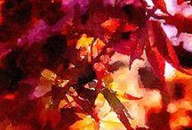 Fall / by Lorraine's Oo La La