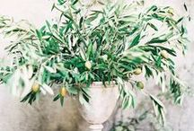 Rustic Elegant Wedding  / by Nicola Pretorius