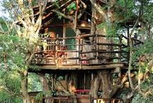 Tree house - home in the trees - elevated cabin