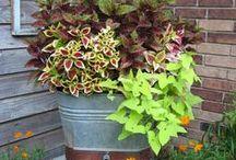 Garden Greatzzz