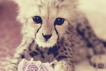 Adorbz! / Random but adorable creatures.