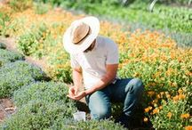 In the Garden / Take a K-J garden tour, get gardening tips and enjoy beautiful garden photos from K-J Culinary Gardener, Tucker Taylor.  http://www.kj.com/the-wine-estate-gardens / by Kendall-Jackson Wines