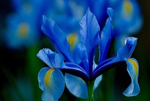 Flowers-Purple,Blue,Green / by Donna B.