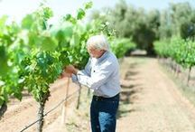 In the Vineyard / Meet our winemakers and travel through our vineyards! We'll bring you along for harvest, vineyard information and more. http://www.kj.com/k-j-vineyards / by Kendall-Jackson Wines
