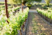 Sustainability / As farmers, our land is our heritage and our future. We are committed to sustainability in our vineyards and community. Our goal is to ensure that the land remains healthy and productive for the following generations to farm.   / by Kendall-Jackson Wines