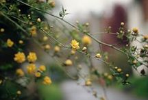 Flowers & Plants / Flowers - wild and free & bouquets // Plants